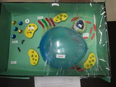 Plant cell model ideas will be an interesting school project in science class if you know how to tackle them – this specific subject is a challenging yet fun. Plant Cell Project Models, Plant Cell Model, Science Projects, School Projects, School Ideas, Diy Projects, Plant Cell Parts, Edible Cell Project, Plant Lessons