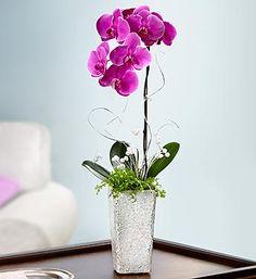 Exotic Breeze™ Orchids | Orchids | 1800FLOWERS.COM-17128