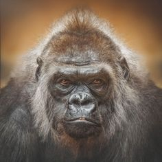 a13399f73e8 95 Best Das Jahr des Affen 2016 images