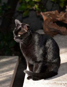 Black cats many times look as if they are brooding darkly; when actually they are having loving thoughts. Love one and see.