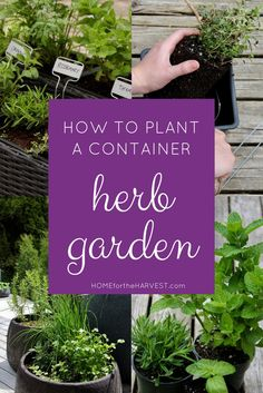 Detailed tutorial for planting a Container Herb Garden (without chemical fertilizers) | Home for the Harvest