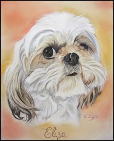 Wonderful Learn To Draw People The Female Body Ideas. Mesmerizing Learn To Draw People The Female Body Ideas. Chien Shih Tzu, Perro Shih Tzu, Shih Tzu Dog, Dog Paw Drawing, Dog Pencil Drawing, Animal Paintings, Animal Drawings, Dog Artwork, Nature Sketch