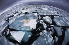 Foto: Anna Henly / Veolia Environnement Wildlife Photographer of the Year