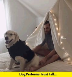 Dog Performs Trust Fall, Totally Nail it