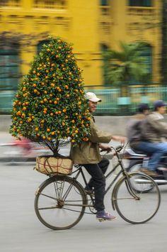 bicycling with a miniature orange tree in Hanoi, VIetnam | Conde Nast Traveler (en espanol) via Corbis