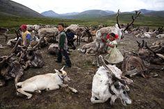Mongolia-Tstaatan-reindeer-children-herders.jpg (960×640)