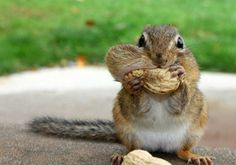 Q: What do squirrels give each other for Valentine's Day?    A: Forget-me-nuts