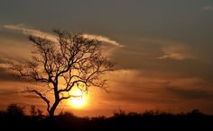 African skies aflame Dawn And Dusk, Africa Travel, Sunsets, Silhouettes, Safari, African, Sky, In This Moment, Explore