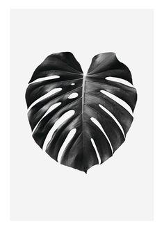 Svartvita posters och prints | Botaniska tavlor till elegant inredning