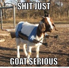 Shit just goat serious funny memes animal meme funny quote funny quotes humor goat humor quotes funny pictures.