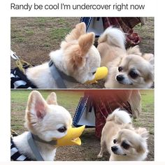 Pics of animals, hilarious animal pictures, funny animal faces, animal pics Funny Dog Memes, Funny Animal Memes, Cute Funny Animals, Funny Animal Pictures, Cute Baby Animals, Funny Cute, Funny Dogs, Animal Pics, Super Funny