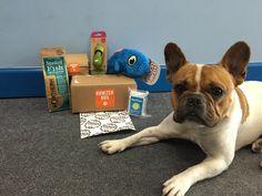 Bowzer Box May box review Loki, French Bulldog, Addiction, Pets, Animals, Animales, Animaux, French Bulldog Shedding, Bulldog Frances