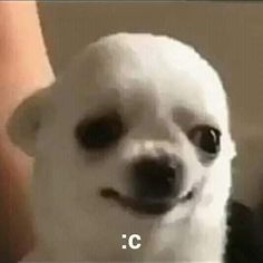 Funny Profile Pictures, Funny Reaction Pictures, Funny Animal Pictures, Cute Memes, Funny Cute, Cute Baby Animals, Funny Animals, Rat Dog, Memes Lindos