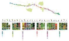 Imagen 46 de 61. Planta de usos vegetales y especies