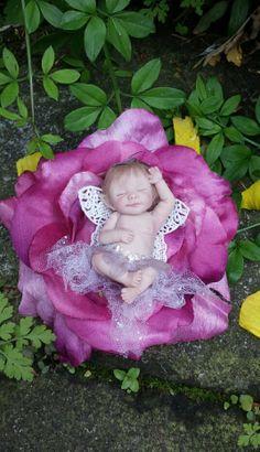 Weefairytales by Shirley Ann Mackillop.Little flower baby fairy