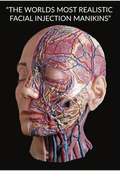 Introducing a significant change in the reality of Facial Injections Archidemia is developing an exc Facial Anatomy, Human Body Anatomy, Human Anatomy And Physiology, Muscle Anatomy, Botox Injection Sites, Botox Injections, Facial Aesthetics, Advanced Aesthetics, Medical Aesthetics