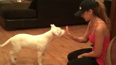 Do you have a deaf dog? this training will help you to train your dog well
