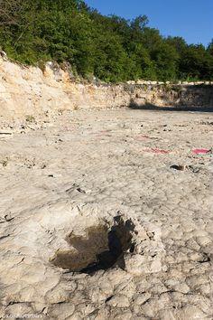 Découverte des dinosaures dans le #jura à Loulle   Jura, France   Photo de Stéphane Godin/Jura Tourisme   #JuraTourisme #Jura