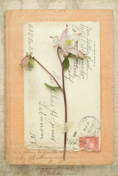 Austen - Deborah Schenck Prints - Easyart.com