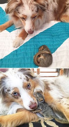 SQUIRREL and DOG are best friends