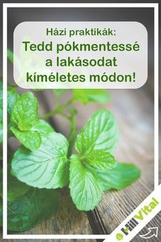 Diy And Crafts, Herbs, Cleaning, Plants, Home Decor, Vintage Men, Creative, Lawn And Garden, Decoration Home