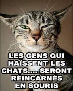 funny cat memes grumpy - funny cat memes - funny cat memes laughing so hard - funny cat memes hilarious - funny cat memes videos - funny cat memes laughing so hard scary - funny cat memes humor - funny cat memes clean - funny cat memes grumpy Funny Cat Memes, Funny Cats, Funny Animals, Cute Animals, Hilarious, Scary Funny, Animal Fun, Memes Humor, Hate Cats
