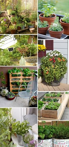 orto terrazzo orto verticale piante aromatiche ortaggi http://www.stylenotes.it/2013/05/orto-in-citta-ortaggi-o-erbe-aromatiche-in-vasi-cassette-e-lattine-per-decorare-il-terrazzo-e-mangiare-sano.html
