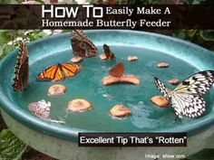 How To Easily Make A Homemade Butterfly Feeder