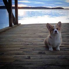 Puppy Longshoreman Fired On First Day