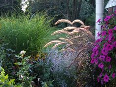 Food and drink Food and drink. Types Of ornamental Grasses Landscape Grasses Zone 7 - Similari . Ornamental Grass Landscape, Ornamental Grasses, Landscape Grasses, Landscape Design, Evergreen Landscape, Low Maintenance Backyard, Low Maintenance Garden Design, High Maintenance, No Grass Backyard