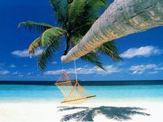 Voted Best Beaches in Caribbean | Swing Under Palm Tree of Beaches of Cuba Varadero
