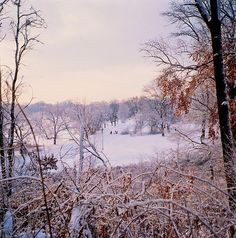 Narnia? Prospect Park