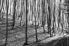 Backlit trees by philippnell. @go4fotos