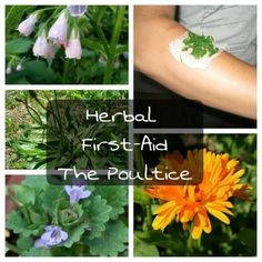 Herbal First-Aid: The Poultice