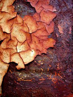 Rust, by Paula Bailey.