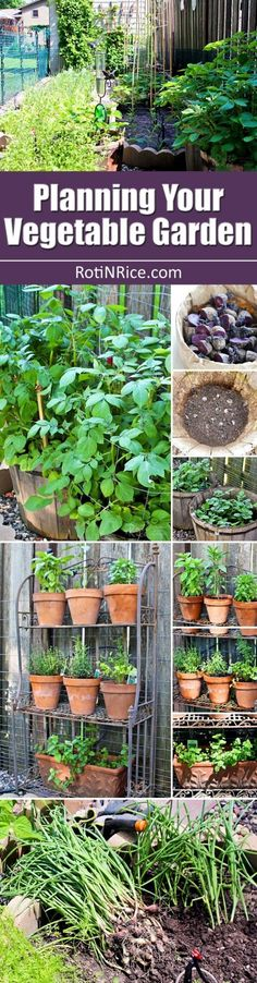 Tips and ideas for Planning Your Vegetable Garden  location layout feeding p