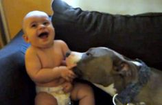 Before you start to question whether or not Pit Bulls can be a good choice for families with kids, you have to see this video.