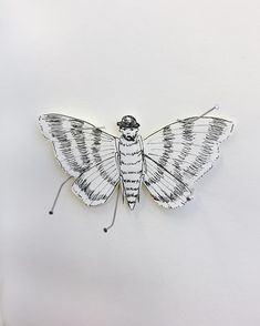 Day Mothman, mine is more like a pinned Moth Waits, smoking a cigar Mothman, Cigar, My Drawings, Smoking, Insects, Animals, Animales, Animaux, Cigars