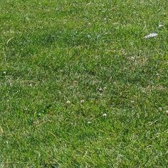 the green grass Green Grass Background, Backgrounds Free, Public Domain, View Image, Free Stock Photos, Herbs, Outdoor Decor, Pictures, Instagram