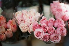 Roses in all shades of pink