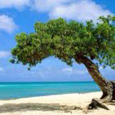 Aruba, great vacation