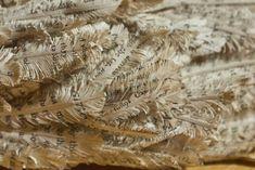 "Close-up of Feather Book Art.  Another hidden piece of art by Edinburgh's ""Library Phantom."""