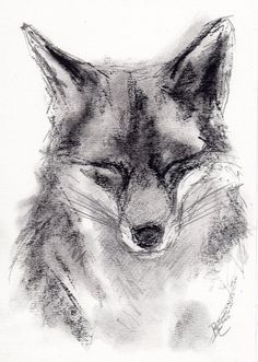 ORIGINAL A4 Charcoal Drawing of a FOX by Animal Artist Belinda Elliott