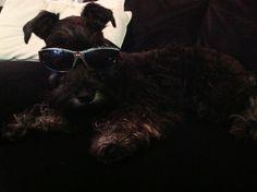 Diesel rockin the Spider-Man Sunglasses