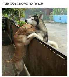True love knows no barriers