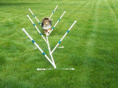Agility Gear Training Weave Poles  6 pole set   by AgilityGearcom, $59.95