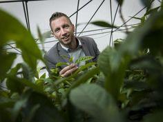 Interview met StartUp Johan Jansen van Tea By Me