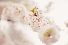 Spring is here by *Lady-Tori on deviantART