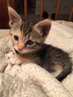 What a cute little fur ball!