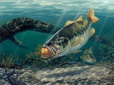 Bass is the ultimate sport fish to go after. Patience is a must if you want that 10 pounder mounted on your wall. In the Ultimate Guide for Bass Fishing we go over everything you need to catch that once-in-a-lifetime Bass. Wildlife Paintings, Wildlife Art, Fish Paintings, Bass Fishing Pictures, Usa Fishing, Fishing Gifts, Hunting Painting, Image Of Fish, Fishing Photography